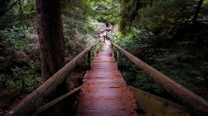 Ponte di legno del ceppo nella foresta fotografie stock
