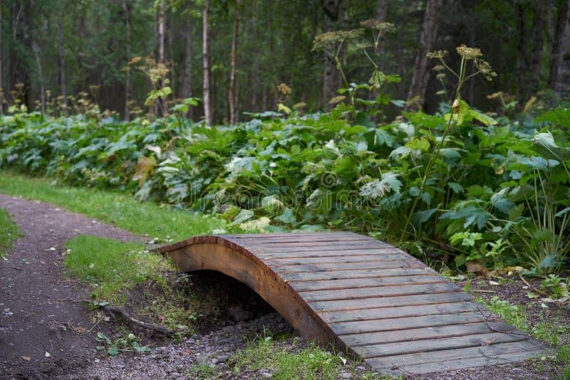 Ponte di legno in foresta d'Alasca fotografia stock