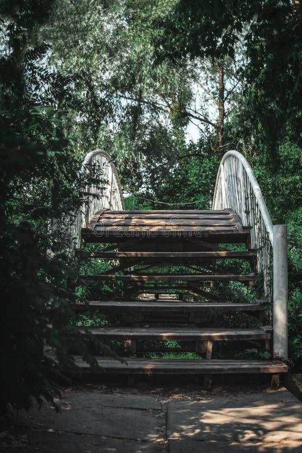 Ponte di legno nella foresta fotografia stock libera da diritti