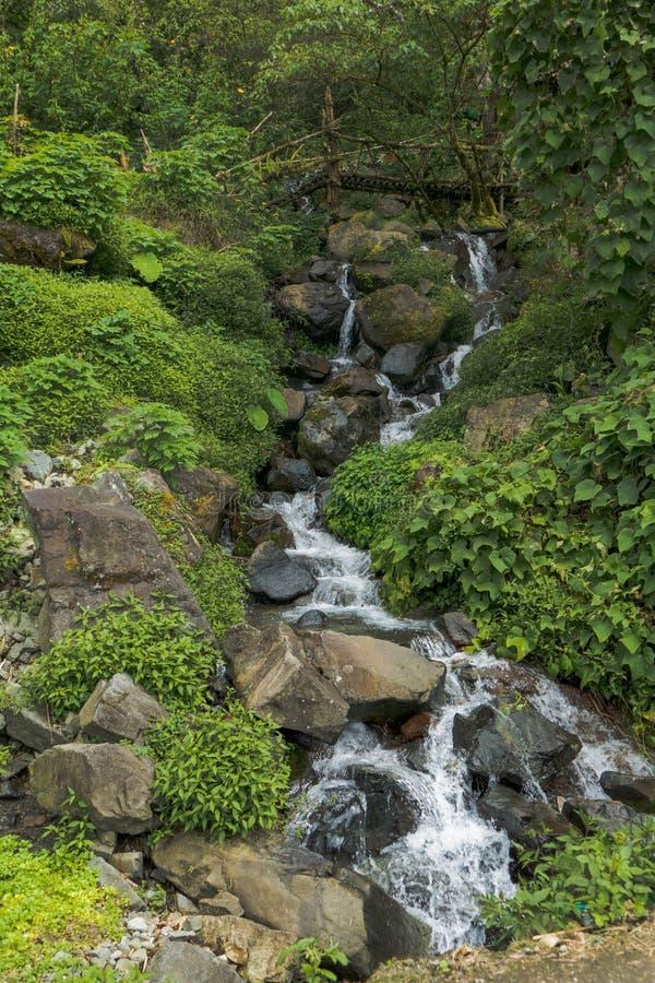 Ponte di legno sopra Forest Waterfall fotografia stock
