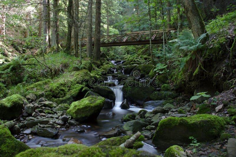 Ponte di legno sopra il fiume selvaggio nel Ravennaschlucht fotografie stock