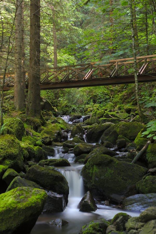 Ponte di legno sopra il fiume selvaggio nel Ravennaschlucht immagini stock