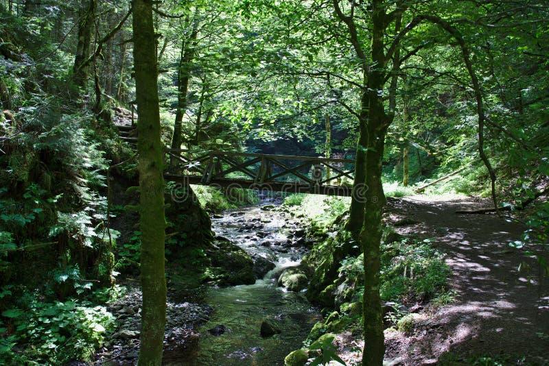 Ponte di legno sopra il fiume selvaggio nel Ravennaschlucht fotografie stock libere da diritti