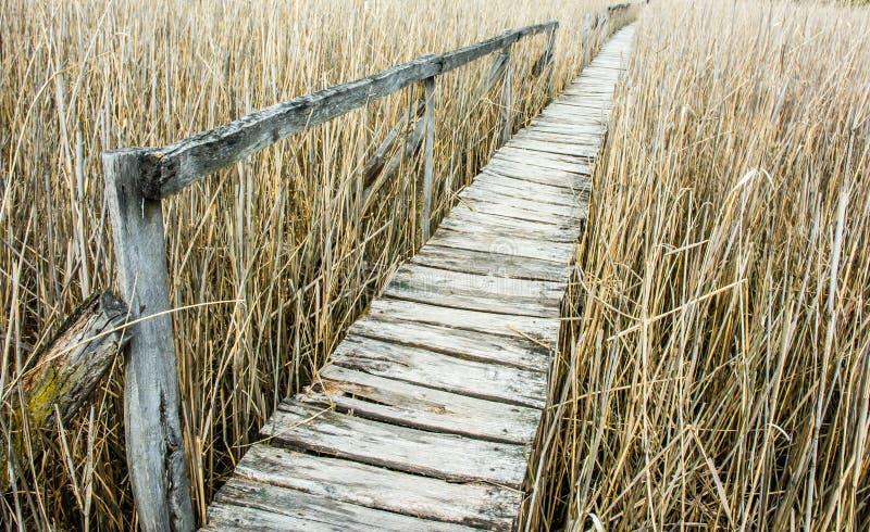Ponte di legno sopra la canna gialla immagini stock