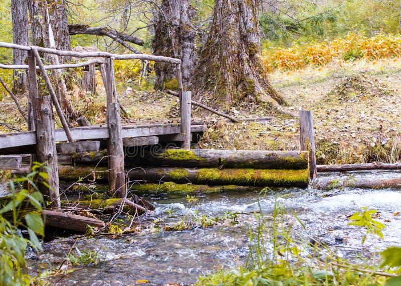 Ponte di legno sopra la corrente nella foresta fotografia stock