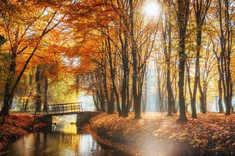 Ponte di modo della passeggiata sopra il fiume con gli alberi variopinti nel tempo di autunno immagine stock libera da diritti