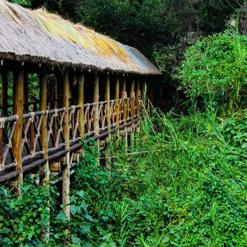 Ponte do caminho acima da floresta imagens de stock