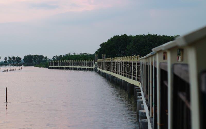 Ponte dos manguezais imagens de stock royalty free