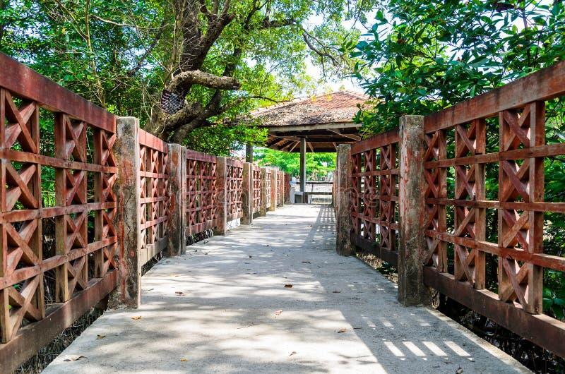 Ponte dos manguezais fotos de stock