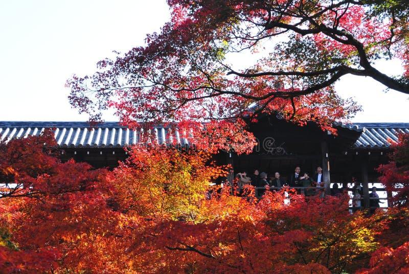 Ponte durante l'autunno, tempio Kyoto, Giappone di Tsuten-kyo di Tofukuji immagine stock libera da diritti