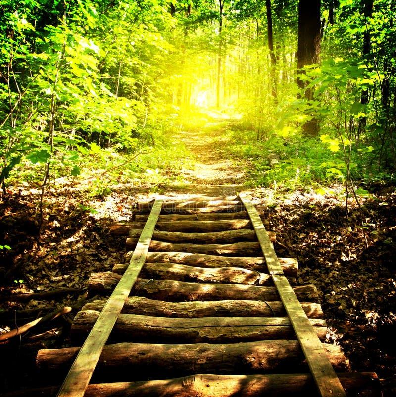 Download Ponte E Sentiero Per Pedoni In Foresta Fotografia Stock - Immagine di giorno, vicolo: 30829000