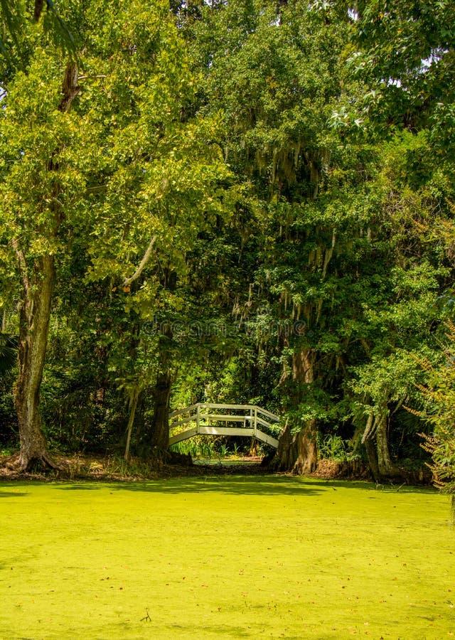 Ponte incurvato del giardino immagine stock