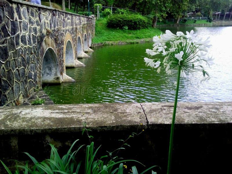 Ponte, lago e flores imagem de stock royalty free