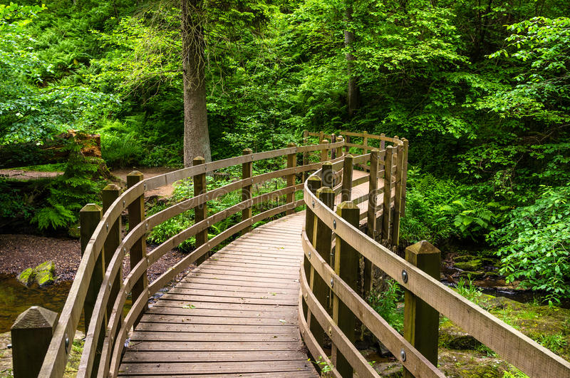 Ponte lungo Forest Path immagini stock libere da diritti