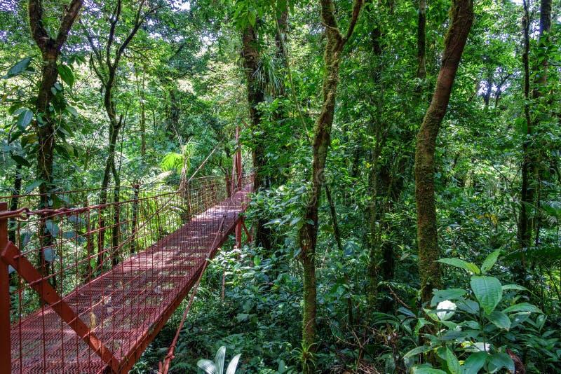 Ponte na floresta úmida de Monteverde imagens de stock royalty free