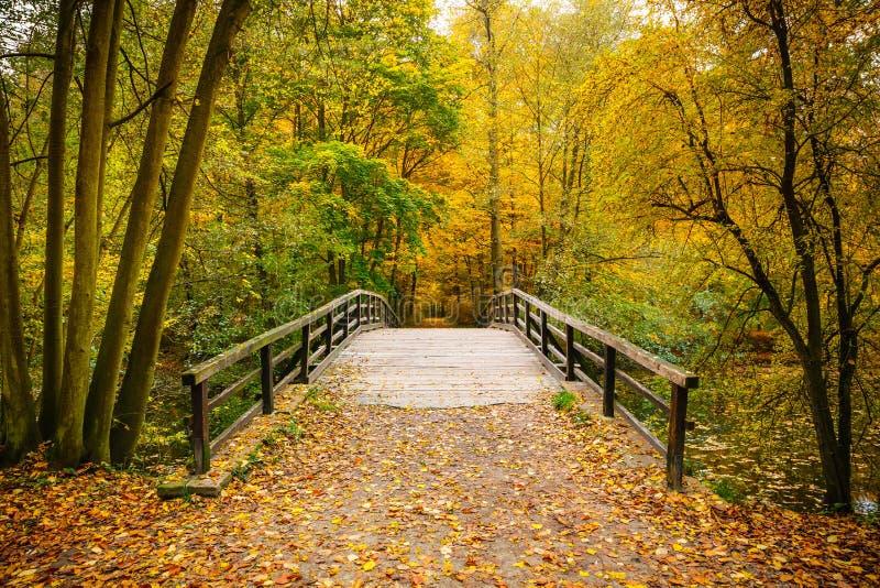 Ponte na floresta do outono fotos de stock