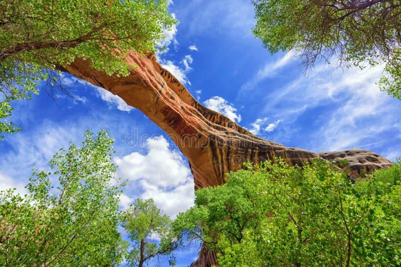 Ponte natural imagem de stock royalty free