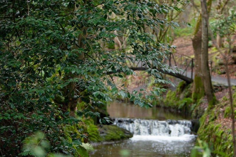 Ponte pedonale sospeso sopra il fiume con una cascata circondata da fogliame degli alberi Sfondo naturale fotografie stock libere da diritti