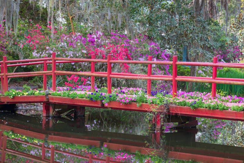 Ponte rosso con i fiori di fioritura della primavera immagine stock