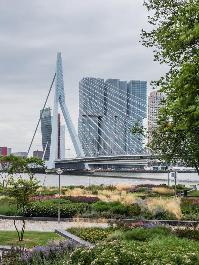 Ponte Rotterdam do Erasmus, Países Baixos foto de stock