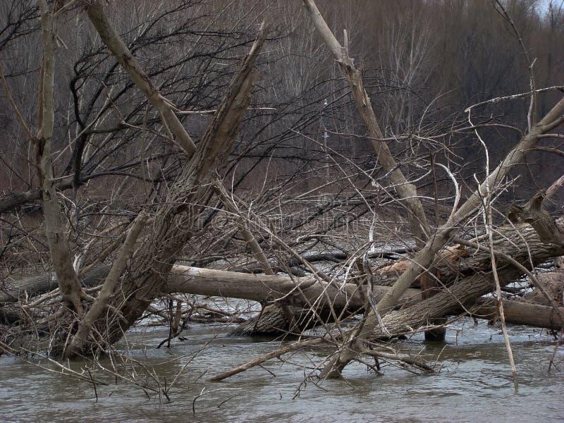 Ponte secco degli alberi fotografia stock libera da diritti
