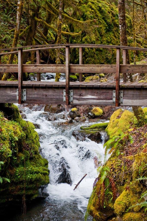 Ponte sobre o rio na floresta imagens de stock royalty free