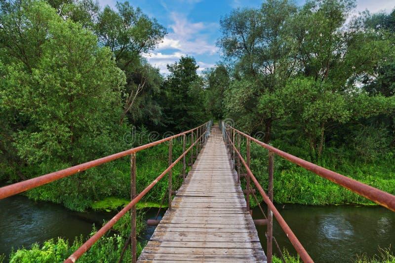 Ponte sobre um rio na floresta do verão foto de stock royalty free