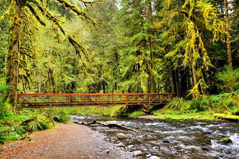 Ponte sopra il fiume circondato dagli alberi muscosi, parco nazionale olimpico, Washington, U.S.A. immagine stock