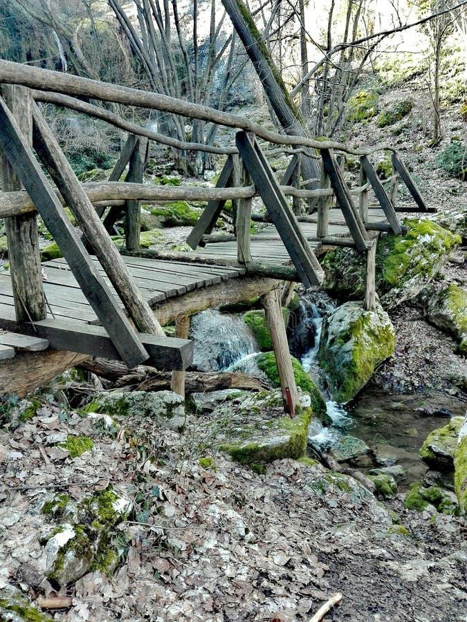 ponte sopra la corrente nella foresta fotografia stock libera da diritti
