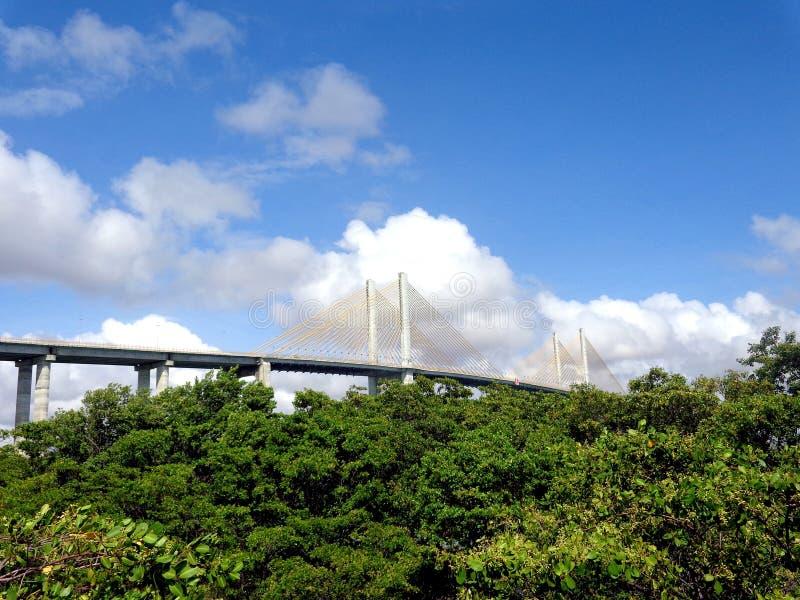 Ponte strallato ed alberi fotografia stock libera da diritti