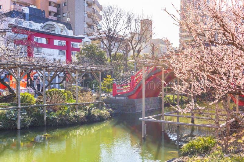 Ponte Torii e Arch do santuário de Kameido Tenjin com flores de ameixa fotografia de stock royalty free