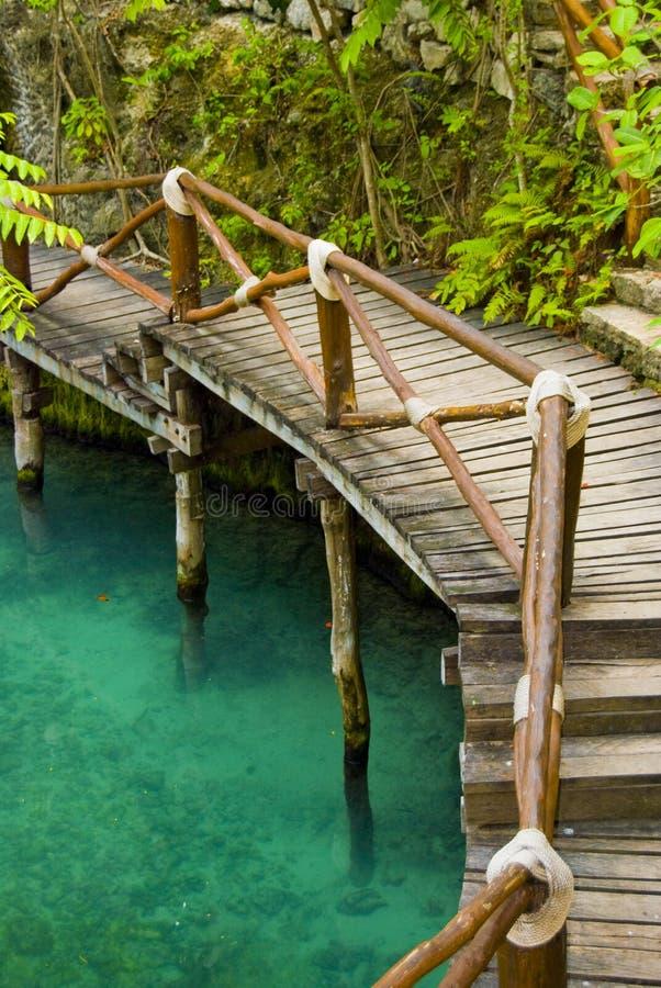 Ponte tropical fotografia de stock
