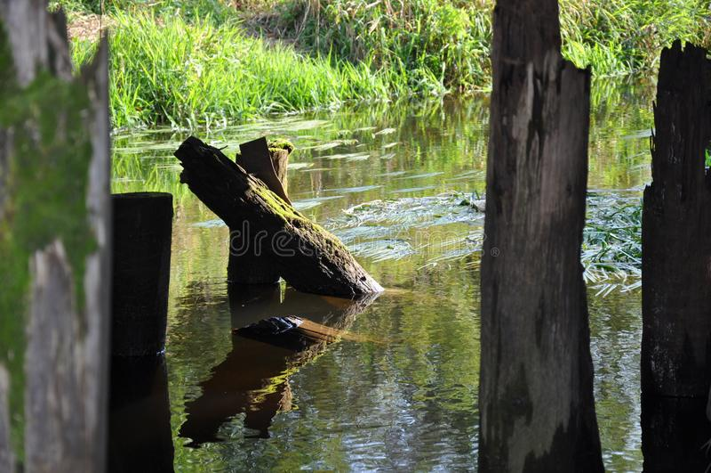 A ponte velha sobre o rio da floresta fotos de stock