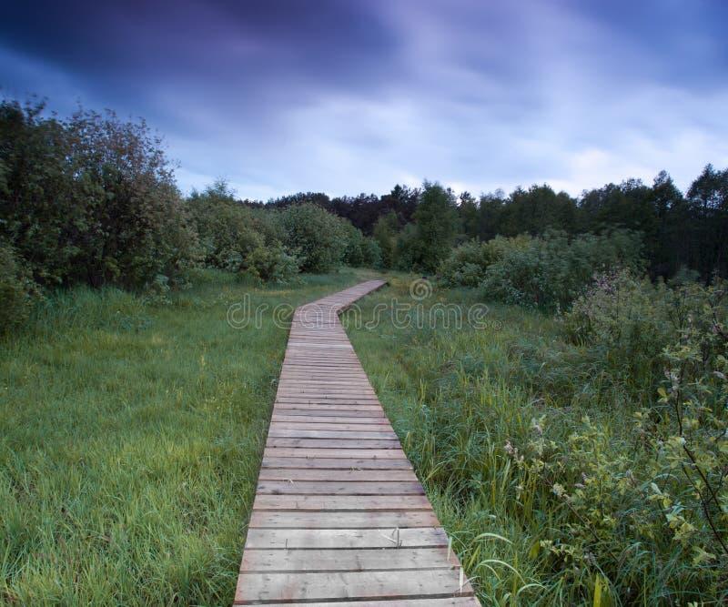 Ponti di legno fra l'erba sotto il cielo tempestoso fotografie stock libere da diritti