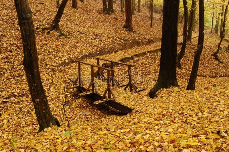 Ponticello della foresta fotografia stock