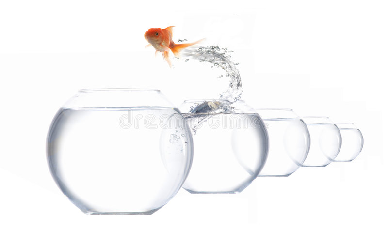Ponticello-pesci fotografia stock