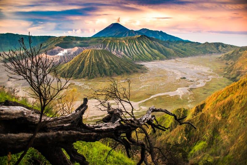 Ponto de vista bonito do nascer do sol com uma montagem Bromo da árvore, East Java, Indonésia fotos de stock royalty free