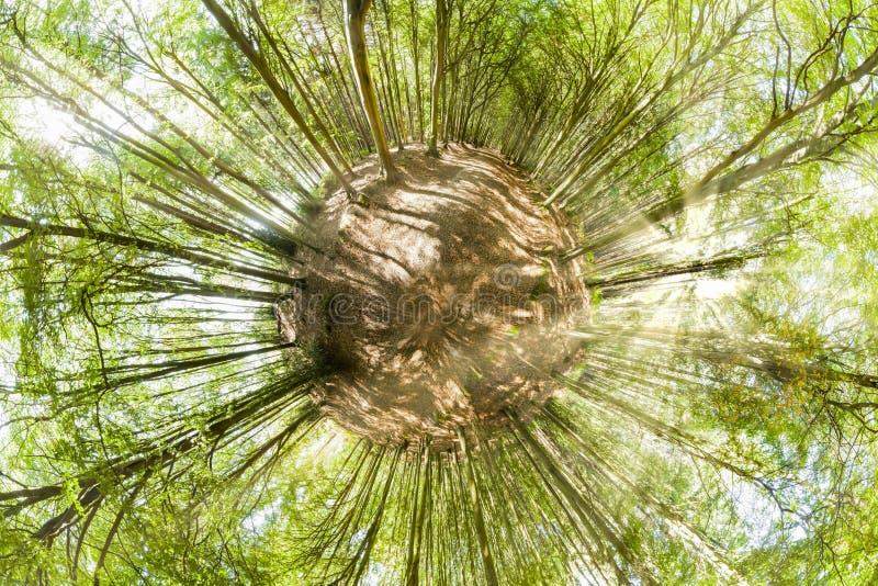 Ponto de vista do planeta da floresta mini na mola imagens de stock royalty free