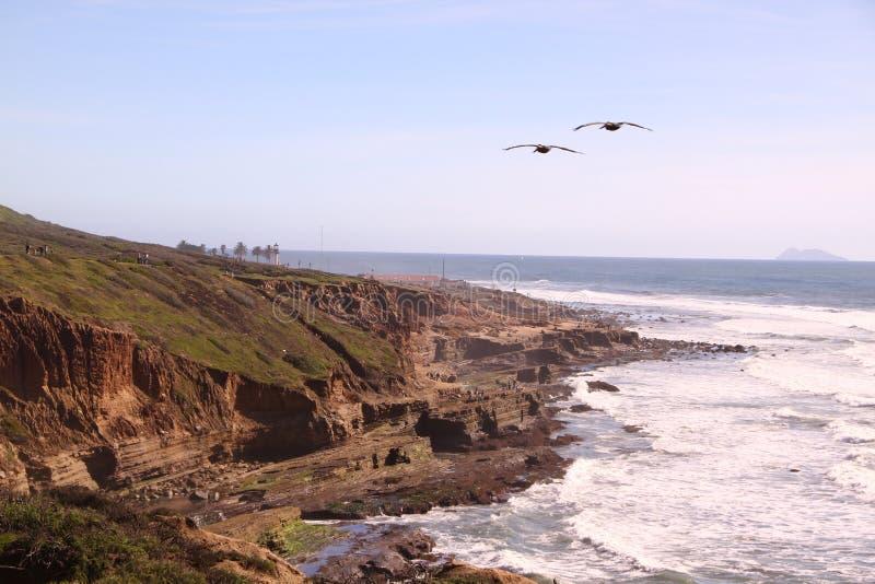 Ponto do pelicano foto de stock