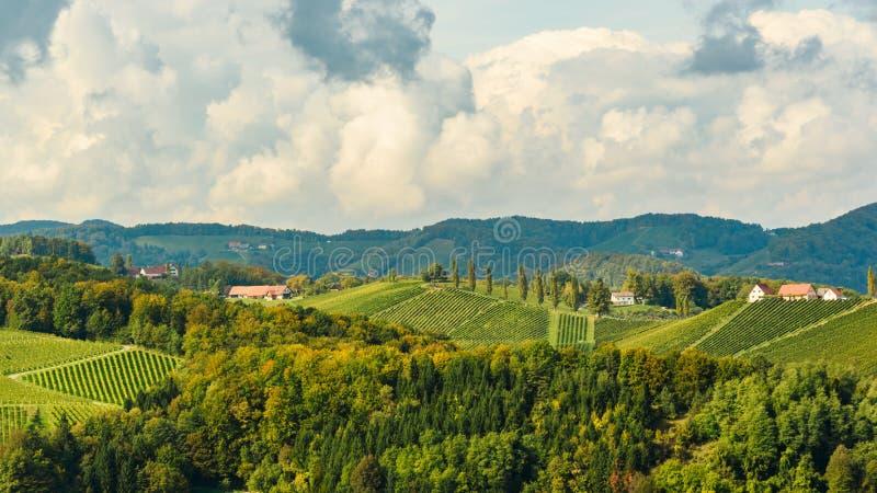 Ponto sul do curso de Styria da área de Leibniz dos vinhedos de Áustria imagem de stock