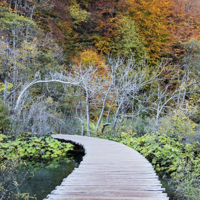 Pontoon in Plitvice National Park stock photos