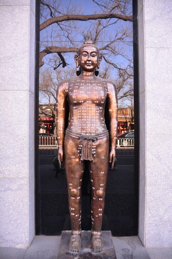 Pontos chineses da acupuntura do corpo humano fotos de stock