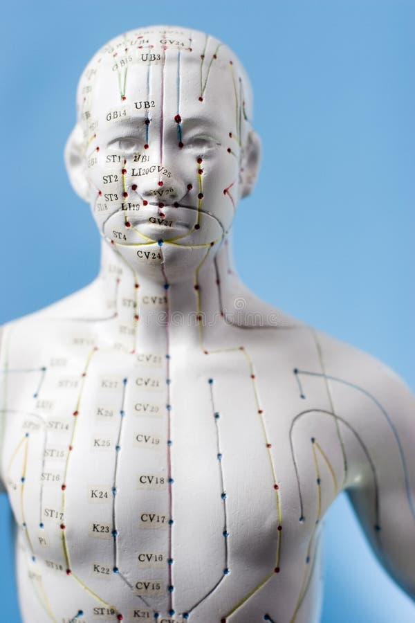 Pontos da acupunctura fotografia de stock