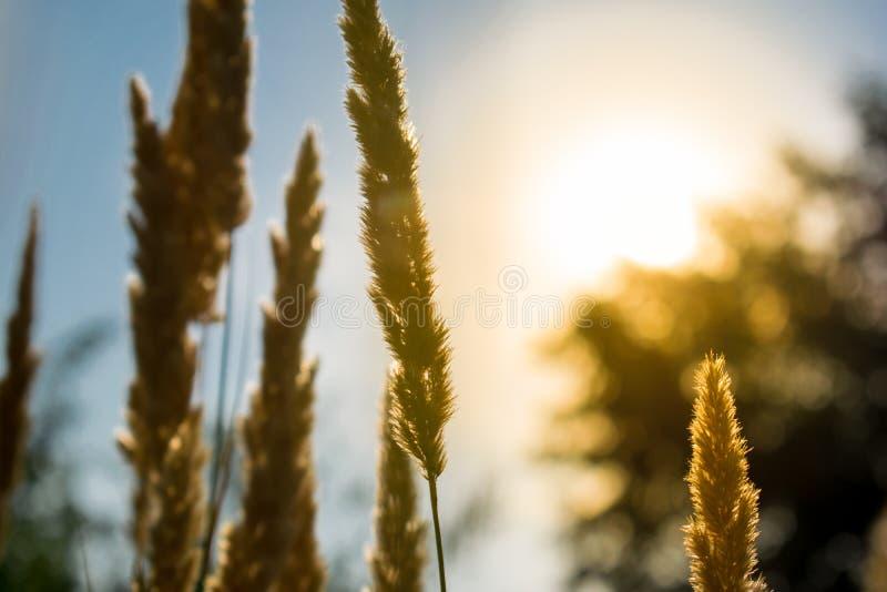 Pontos de Live Golden Fundo natural da vegetação através dos raios do sol No fundo o céu e os verdes fotos de stock