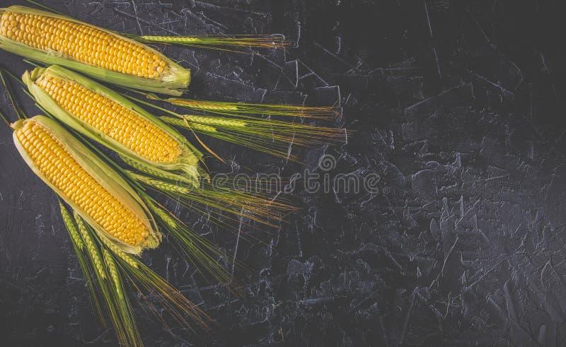 Pontos do milho e do trigo fotos de stock