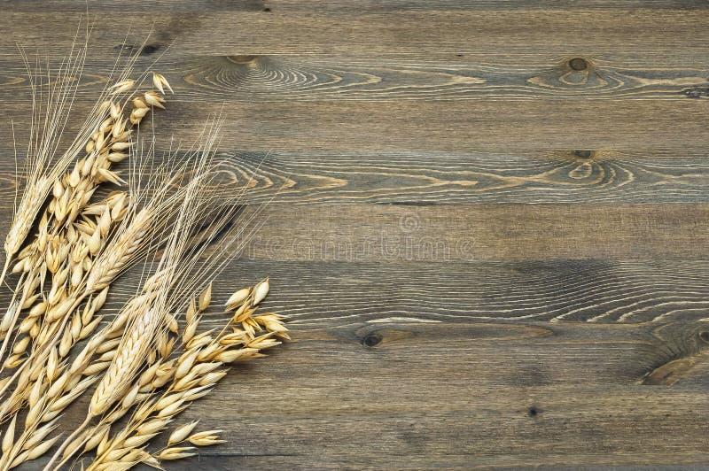 Pontos do trigo e da cevada maduros, maduros no canto de inferior esquerdo da imagem em um fundo da madeira fotos de stock