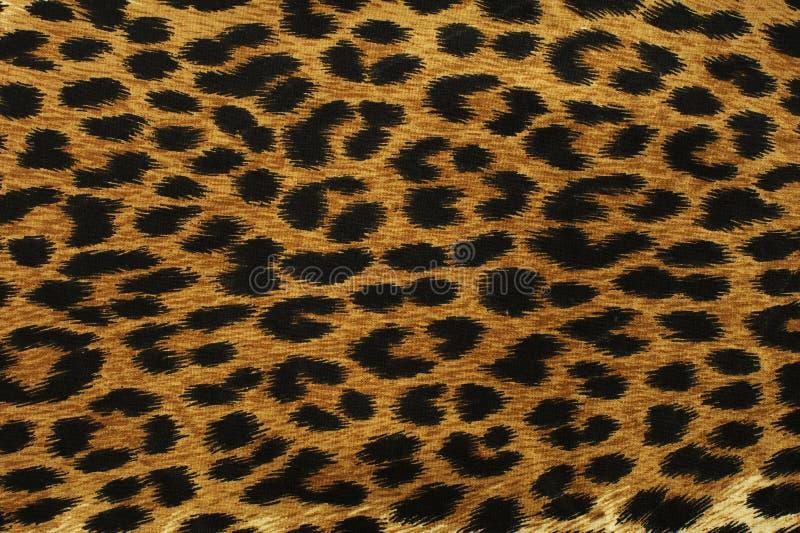 Pontos pretos do leopardo imagens de stock royalty free