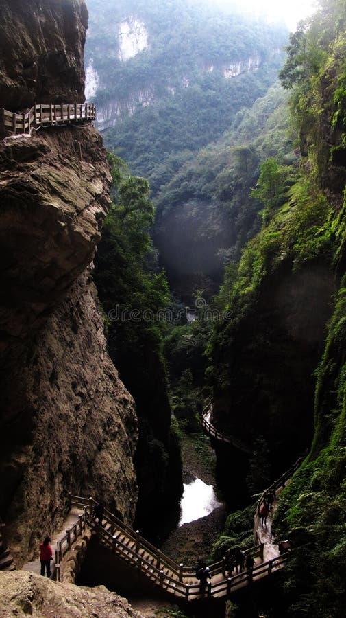 Ponts en parc naturel de forêt photos stock