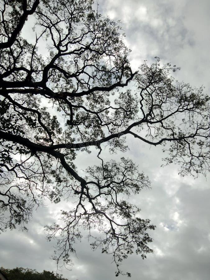 ponury drzewo zdjęcia royalty free