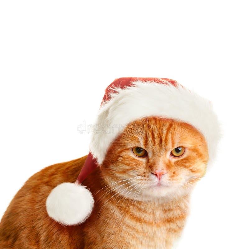 Ponury kot w Santa kapeluszu na Białym tle fotografia royalty free